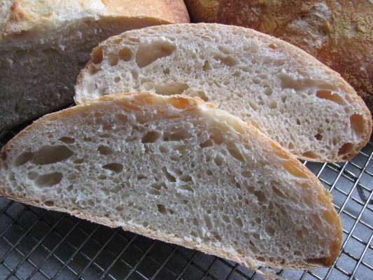 White Sourdough Crumb