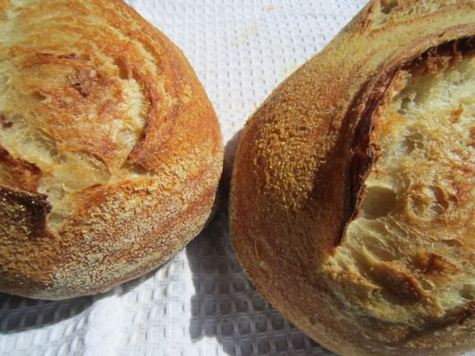 in this recipe sourdough bread how to make sourdough bread sourdough ...