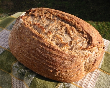 first loaf of Desem Onion Rye