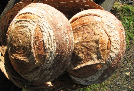 Two Sourdough Rye loaves