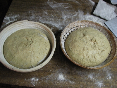 dough ready to proof